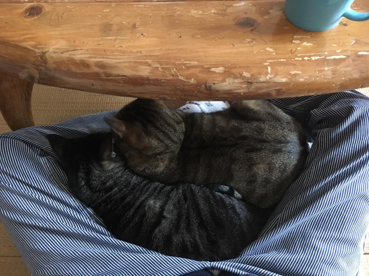 猫こたつ.jpg