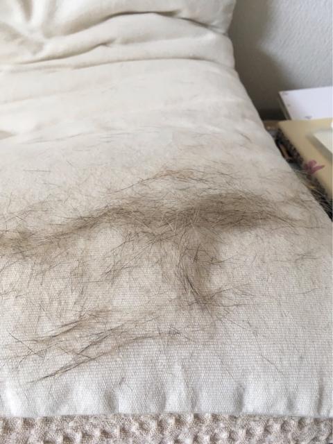 膝でお昼寝タラちゃんの毛.jpg