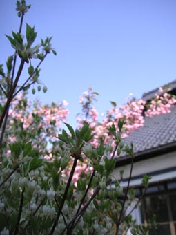 ito-20090427a.jpg