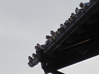 ito-20091221a.jpg