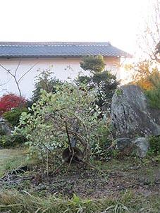 ito-20101124c.jpg