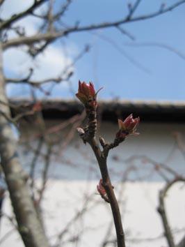 ito-20110412.jpg