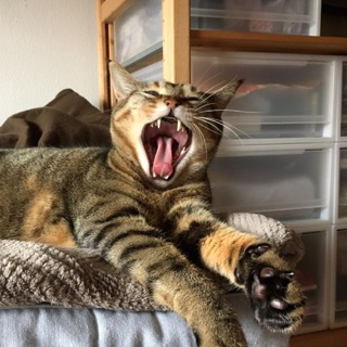 itomataro-20170421猫の牙.jpg